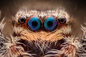 Пауки на Земле становятся все агрессивнее – исследование