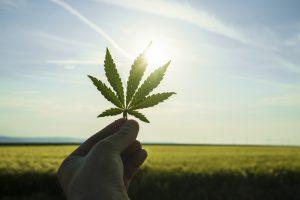Люксембург станет пионером Евросоюза в легализации марихуаны