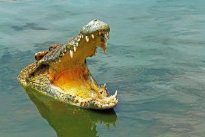 В Австралии дроны высматривают крокодилов, угрожающих пловцам
