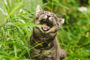 Ученые определили, почему кошки жуют траву