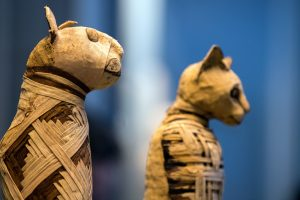 В Египте откопали коллекцию мумифицированных кошек