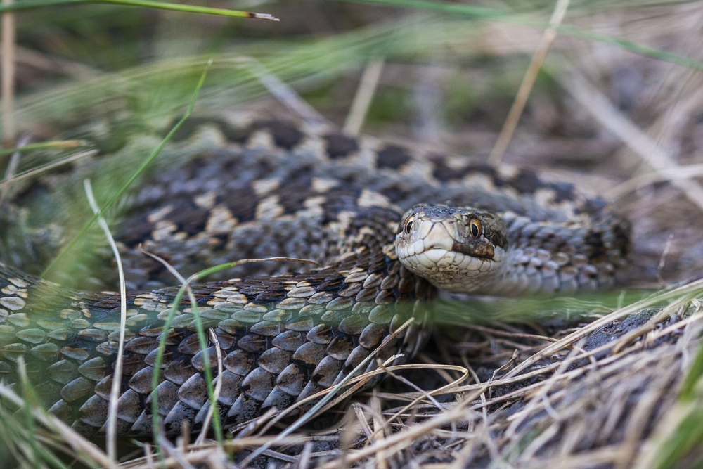 В Украине с начала года от укусов змей пострадал 131 человек