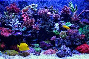 В Киеве появится подземный океанариум