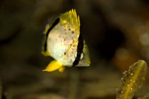 Тропических рыб заметили в северных водах Канады