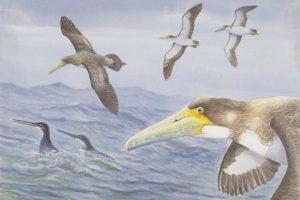 В  Новой Зеландии нашли скелет зубастой птицы