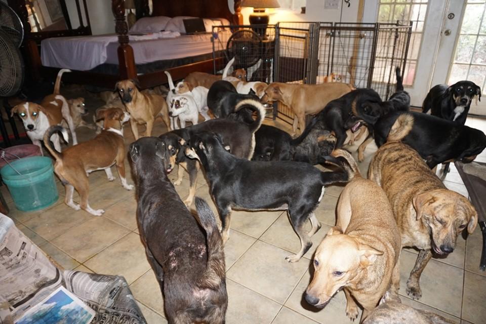 Жительница Багамов спасла от урагана около 100 собак