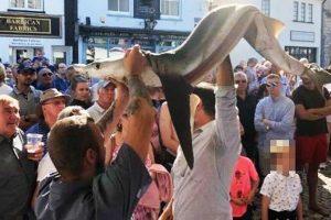 На фестивале в Плимуте съели редкую голубую акулу
