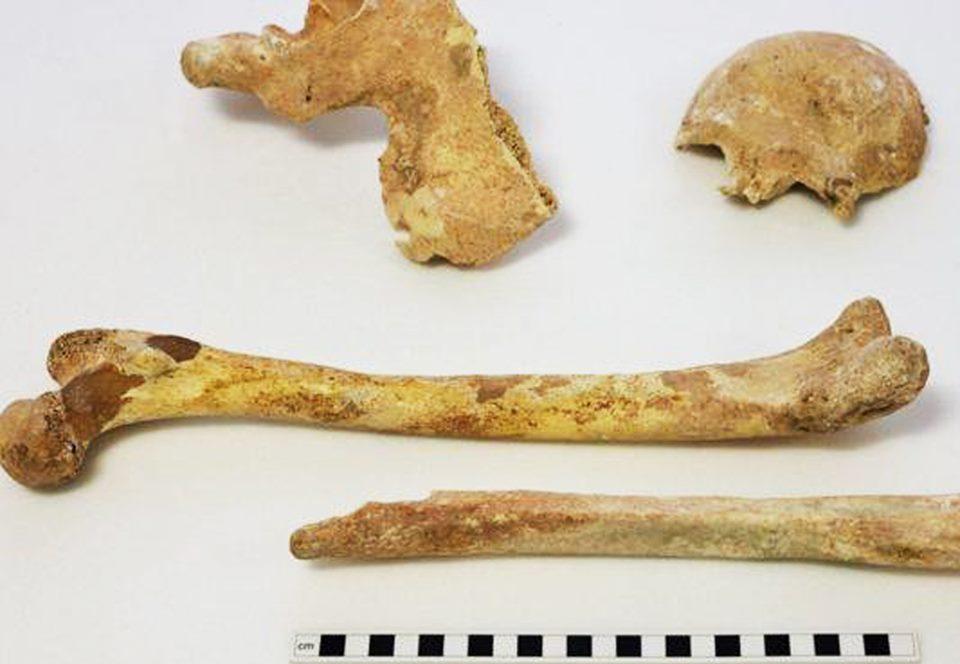 В Англии определили возраст древних костей из коробок, утерянных 55 лет назад.Вокруг Света. Украина