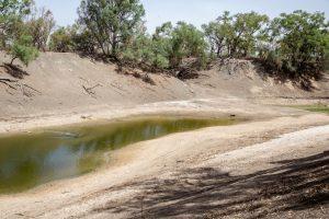 Австралия эвакуирует редких рыб из-за засухи