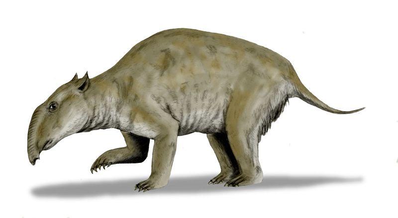 Вымершие предки коал не умели сгибать лапы