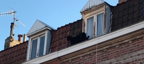 Во Франции по городским крышам гуляла пантера