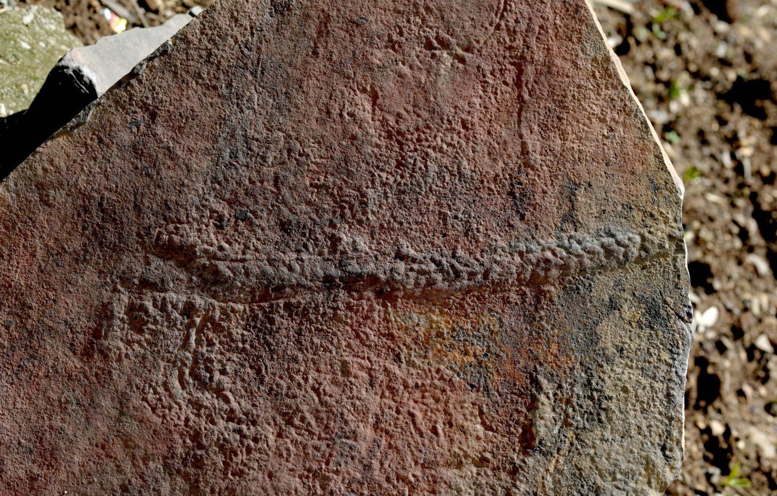 В Китае нашли ископаемое со сложным поведением