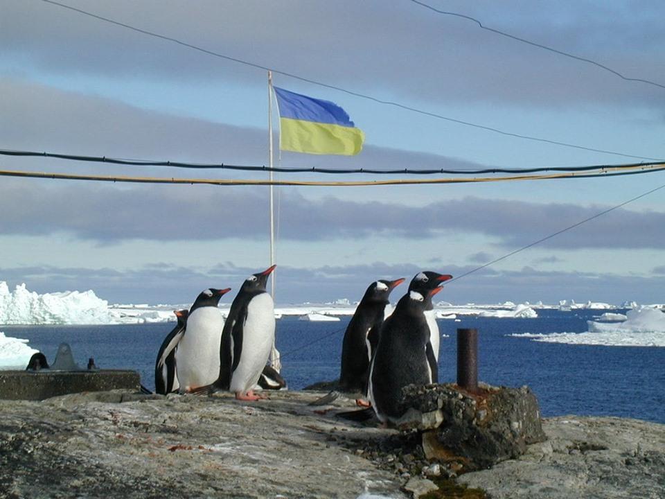 В Антарктиде впервые в истории пройдет марш за животных