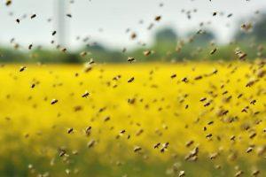 В Индии рой разъяренных пчел задержал рейс на два часа