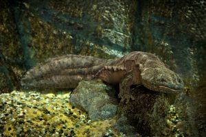 Зоологи открыли новый вид саламандр