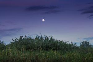 14 сентября взойдет Урожайная луна