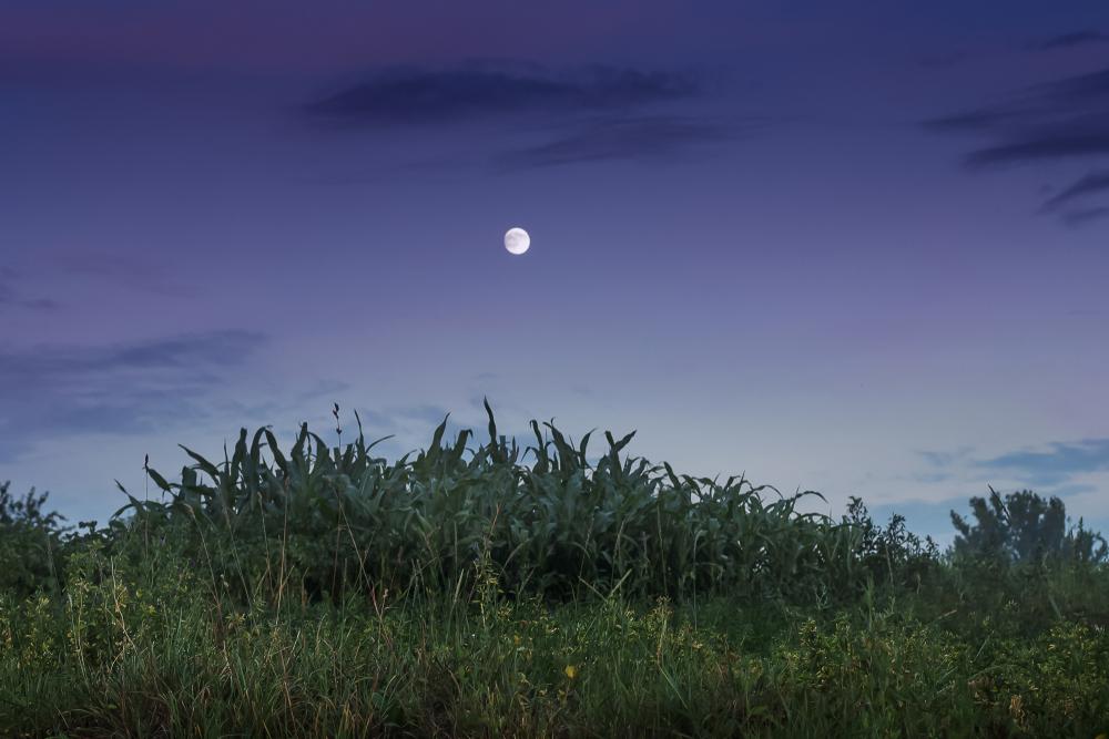 14 сентября взойдет Урожайная луна.Вокруг Света. Украина