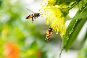 Пчелы разделяют воспоминания на хорошие и плохие