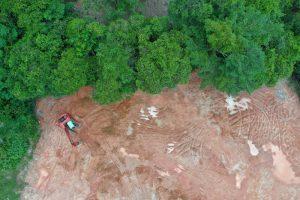 Планета ежегодно теряет лесные площади размером с Великобританию