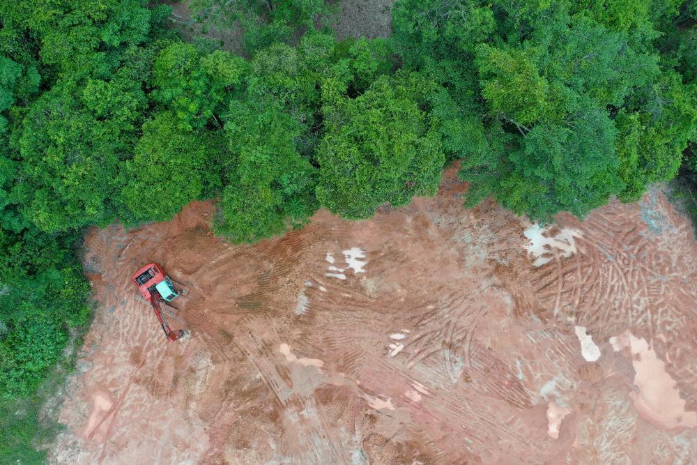 Планета ежегодно теряет лесные площади размером с Великобританию.Вокруг Света. Украина