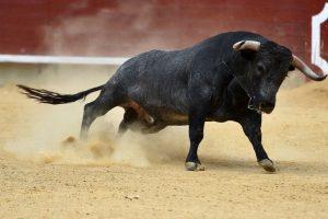 На фестивале в Испании бык насмерть проткнул рогами мужчину