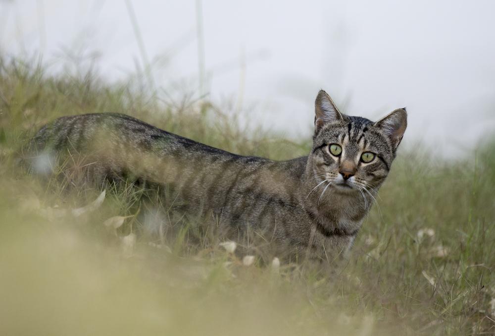 В австралийском городе ввели комендантский час для котов