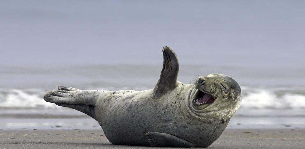В Австралии тюлень сорвал наркосделку на 1 миллиард долларов.Вокруг Света. Украина