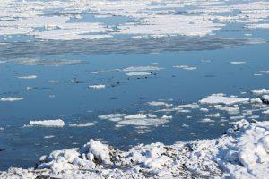Арктический морской ледяной покров не восстанавливается - ученые