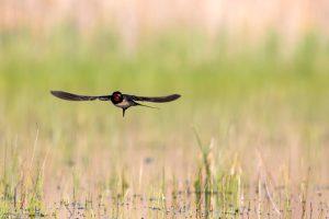 Популяция птиц в Северной Америке сократилась на 29%