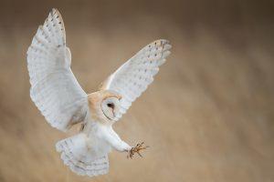 Белые совы парализуют добычу, используя лунный свет