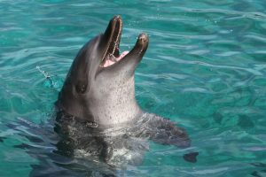 Популяция дельфинов в Ла-Манше под угрозой из-за пестицидов – новое исследование