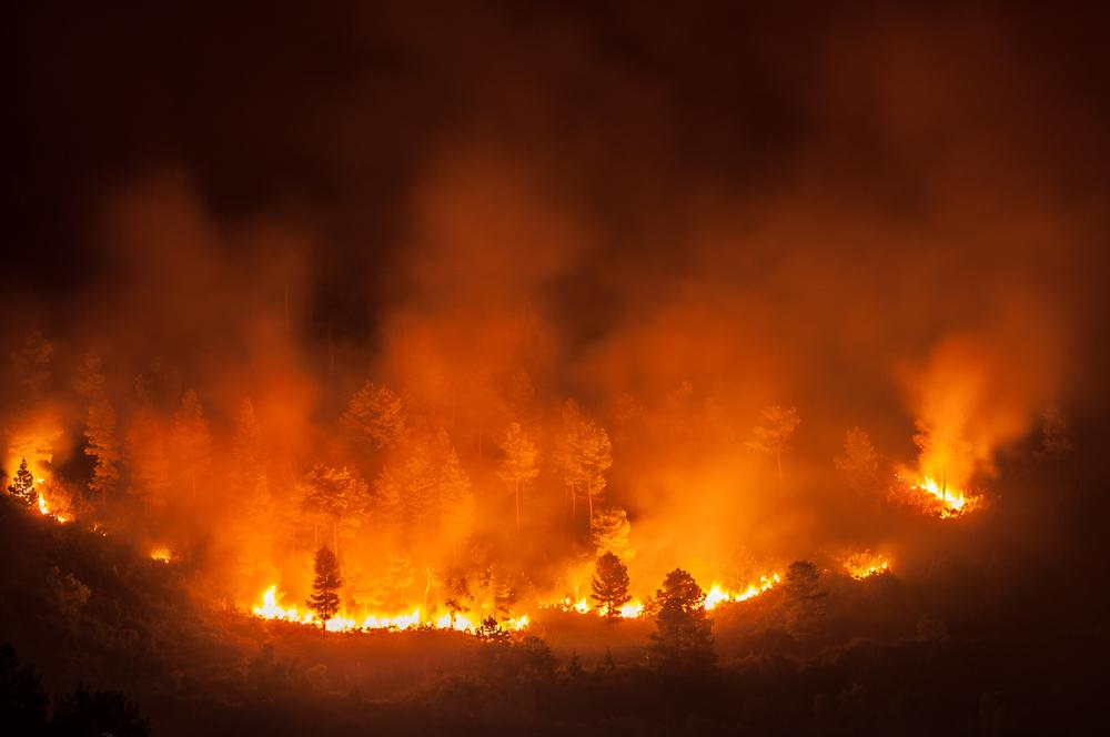 Из-за лесных пожаров в Малайзии закрываются сотни школ