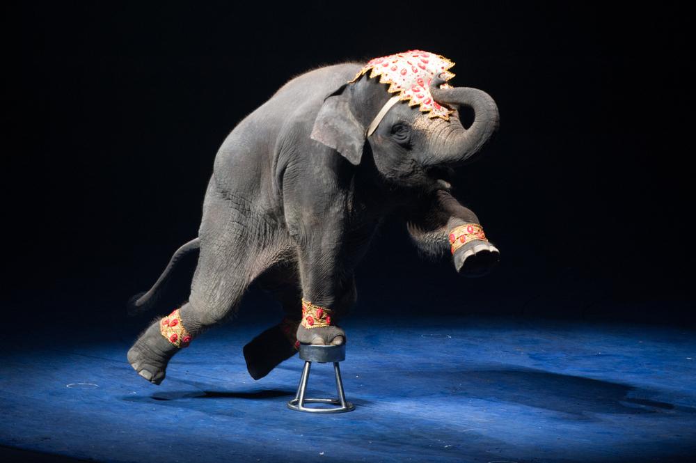 В Дании выкупили последних цирковых слонов.Вокруг Света. Украина