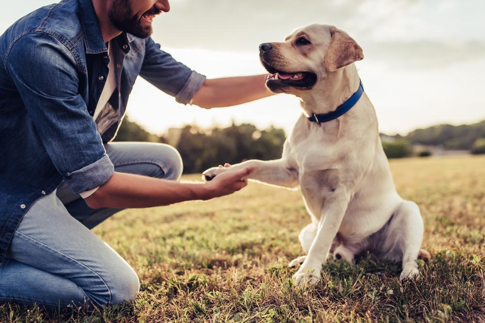 В процессе разведения люди кардинально изменили форму мозга собак