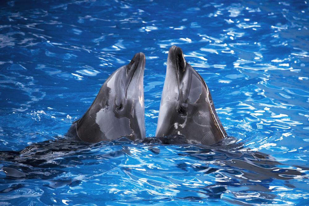 В Японии начали ежегодное истребление дельфинов