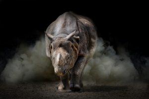 В Германии разъяренный носорог напал на машину