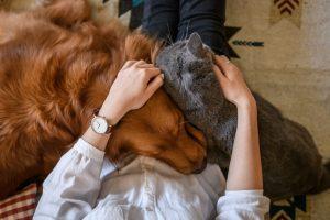 Кошки привязываются к людям сильнее, чем собаки - ученые