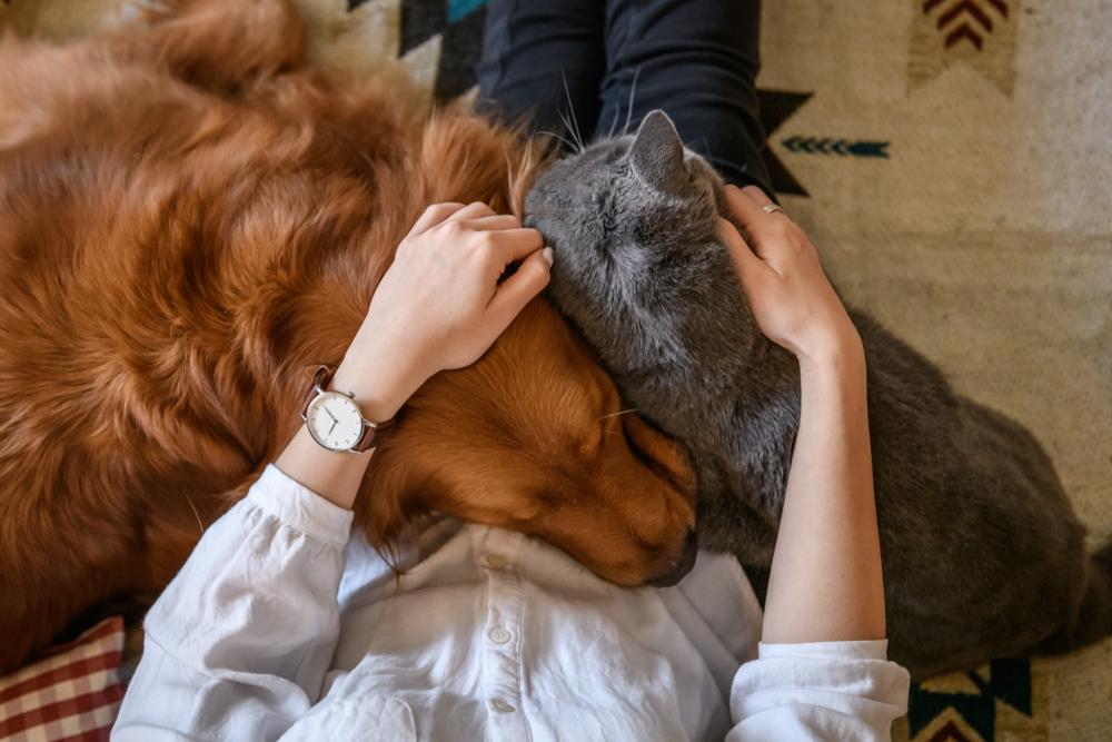 Кошки привязываются к людям сильнее, чем собаки - ученые.Вокруг Света. Украина