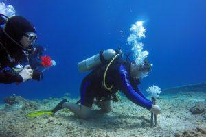 В Израиле исчезающие кораллы заменяют биопластиком