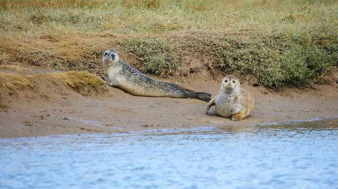 Более сотни новорожденных тюленей обнаружили на берегу Темзы