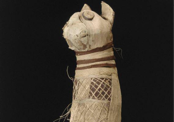 У древнеегипетской мумии кошки нашли три хвоста и пять лап.Вокруг Света. Украина
