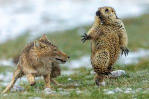 Последний момент: назван победитель фотоконкурса дикой природы