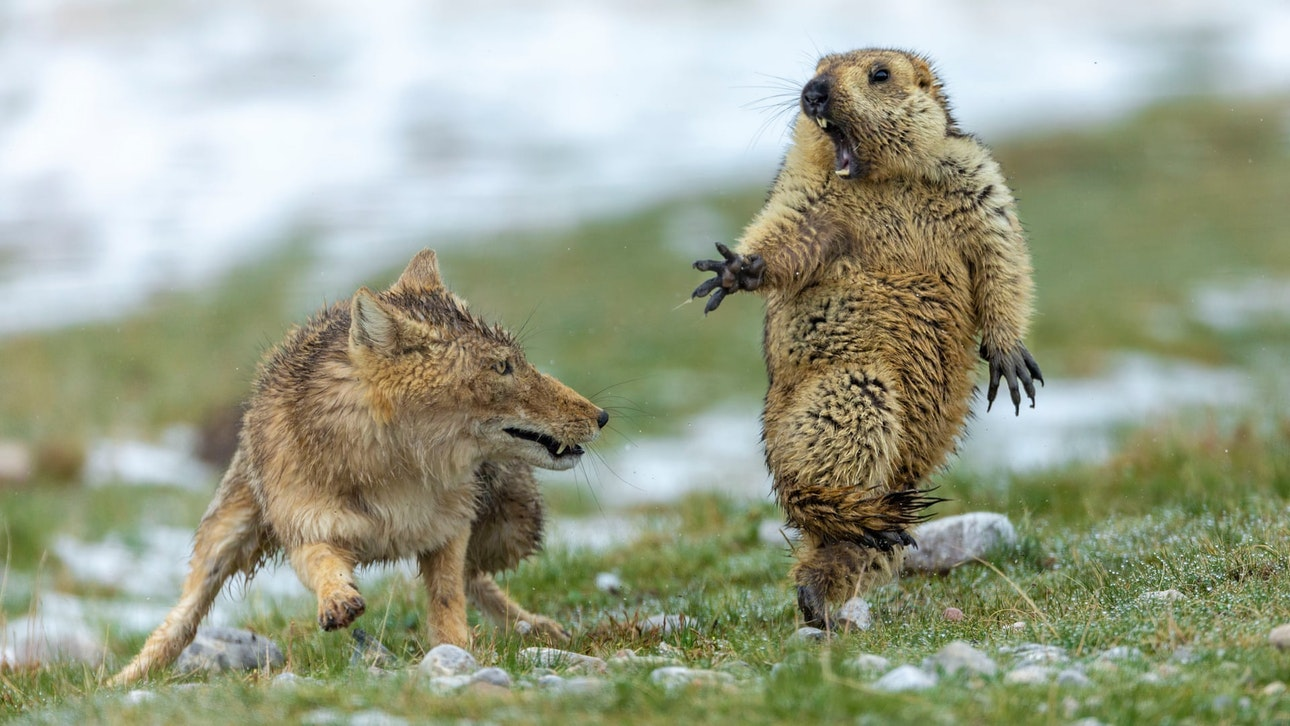 Последний момент: назван победитель фотоконкурса дикой природы.Вокруг Света. Украина