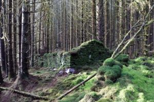 В шотландских лесах нашли руины старинного спиртзавода