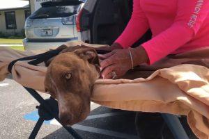 На Багамах нашли собаку, выжившую после урагана Дориан