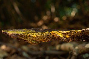 Выглядит, как грибок, но ведет себя, как животное – в Париже показали новый организм