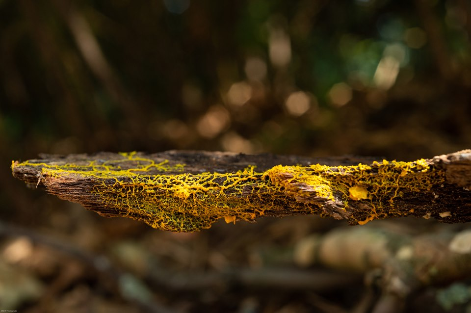 Выглядит, как грибок, но ведет себя, как животное – в Париже показали новый организм.Вокруг Света. Украина