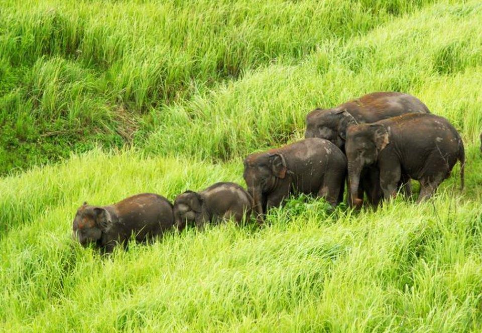 В Таиланде, спасая друг друга, погибли шесть слонов.Вокруг Света. Украина