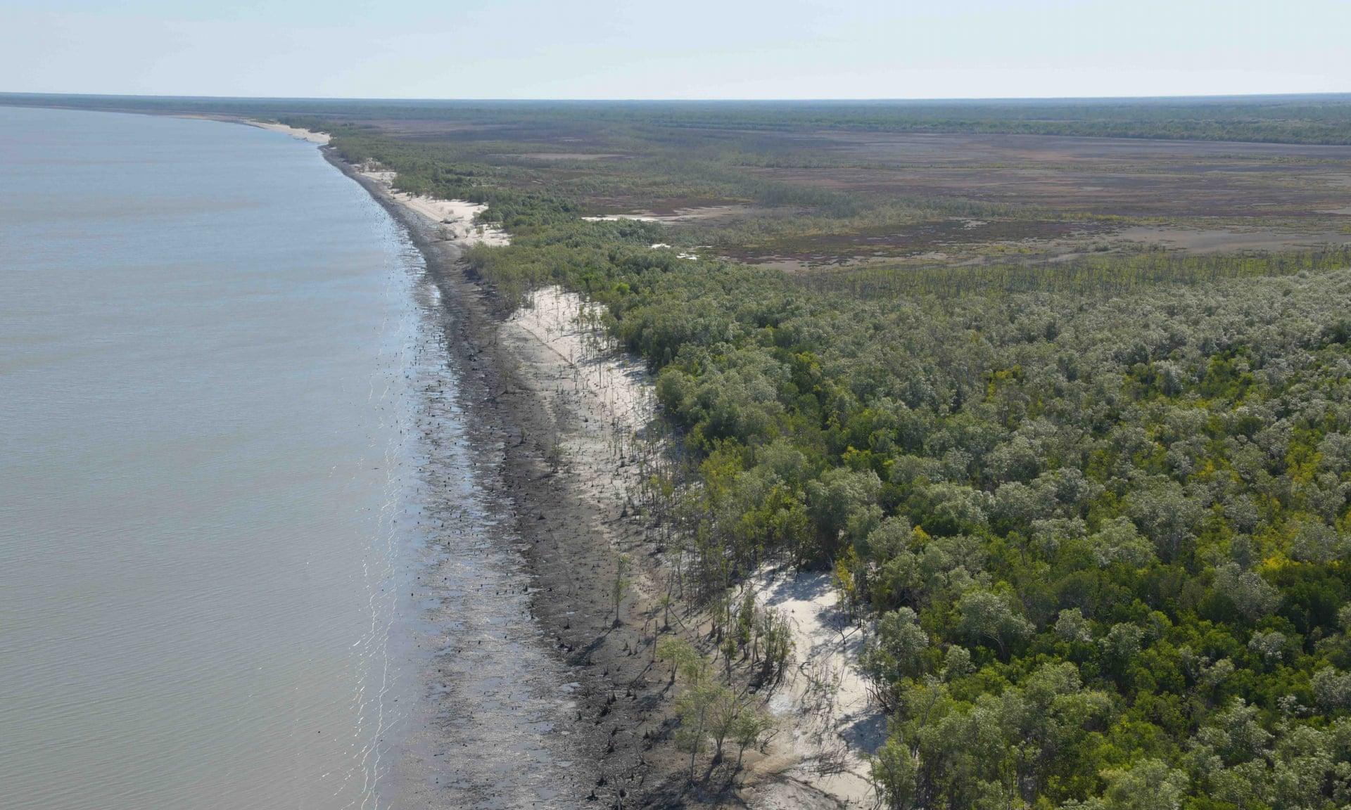 В Австралии обнаружили 400 км мертвых мангровых лесов