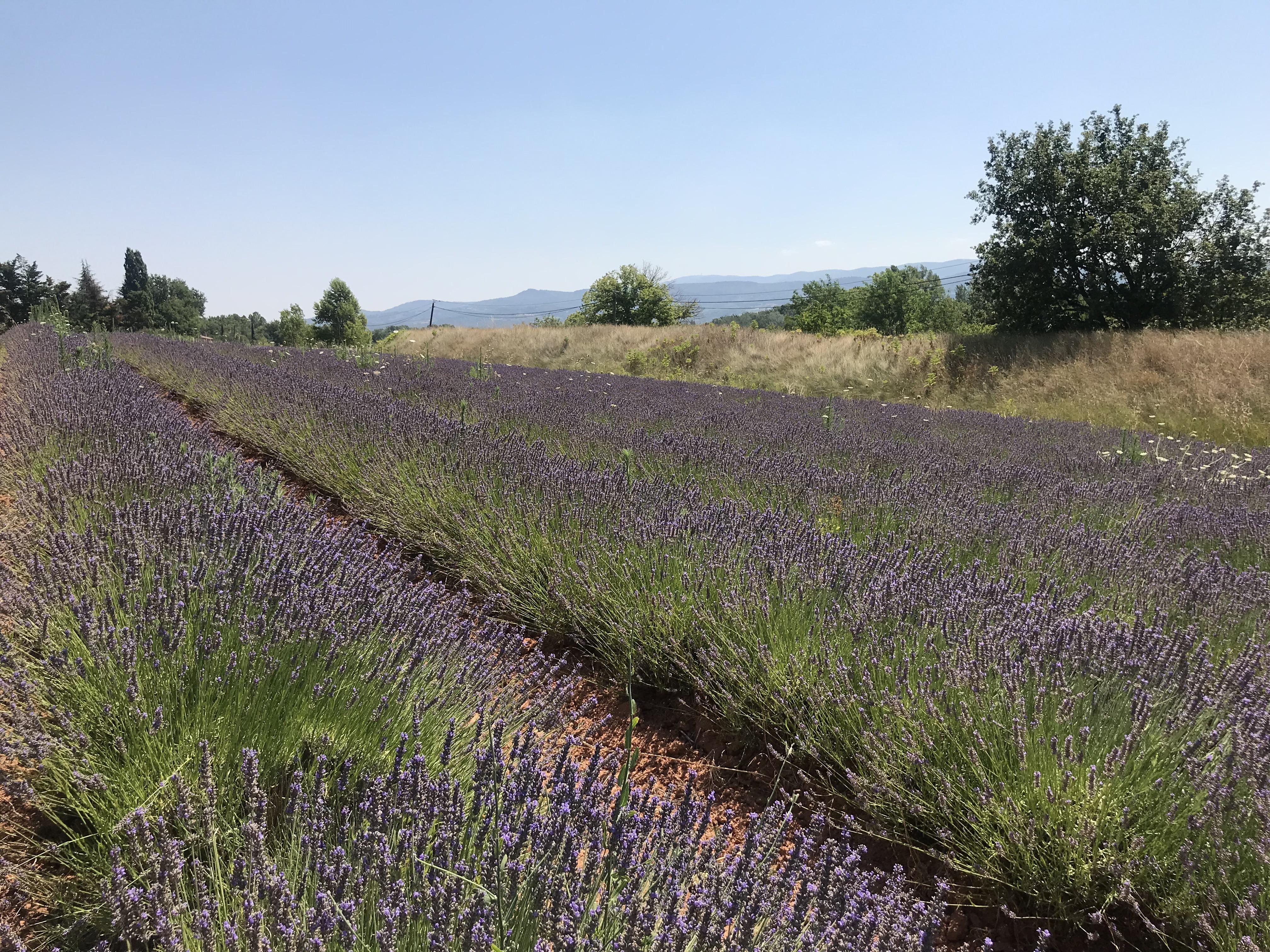По Франции на кемпере от Лилля до Ниццы: личный опыт